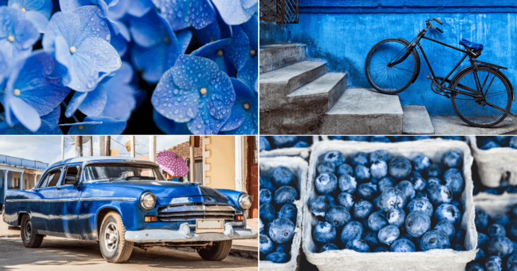 Collage of a car, blueberries, a blue wall and blue hydrangea