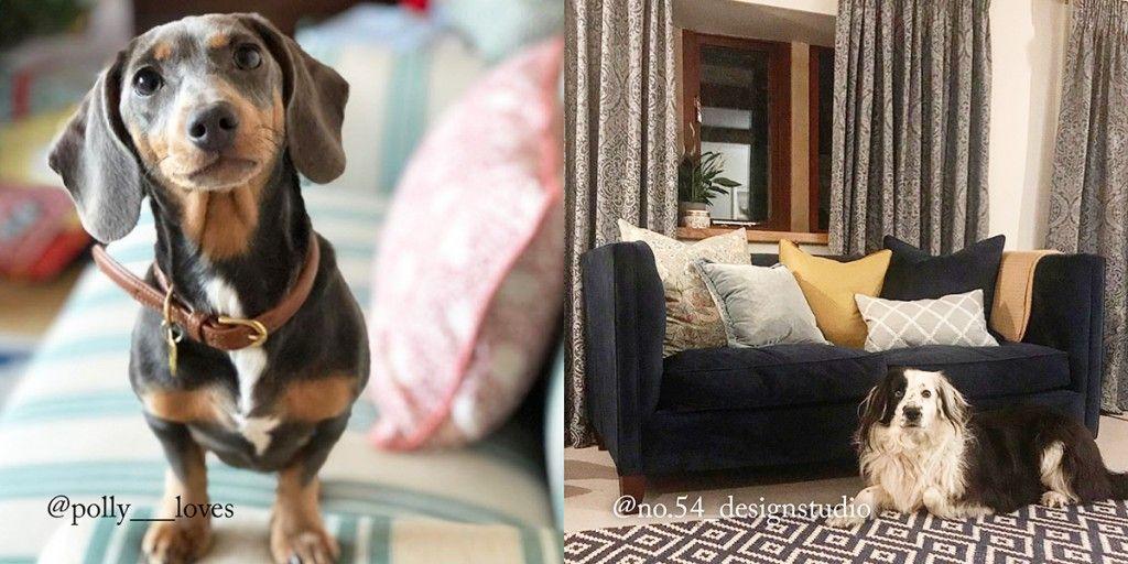 Pet friendly sofas